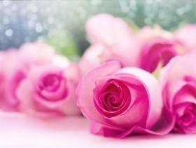 imagem extraída do google sem restrição de uso e compartilhamento - rosas